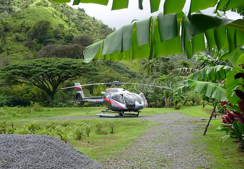 Product Rainforest Landing