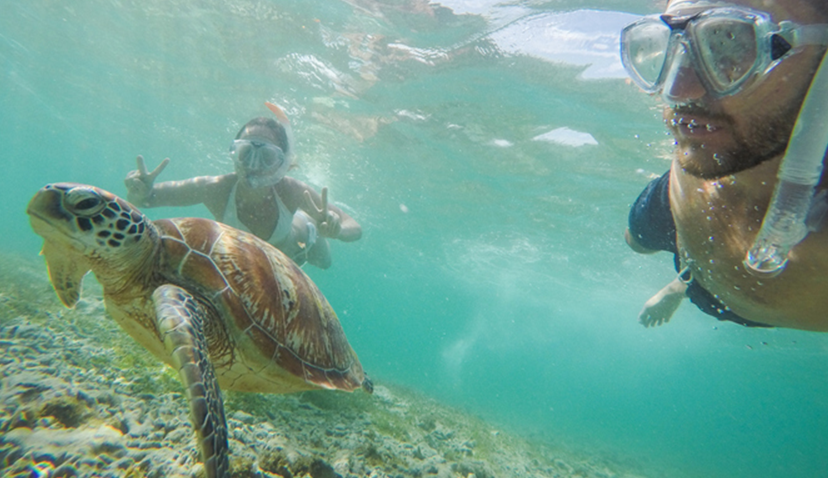 Product Kayak and Snorkel With Turtles